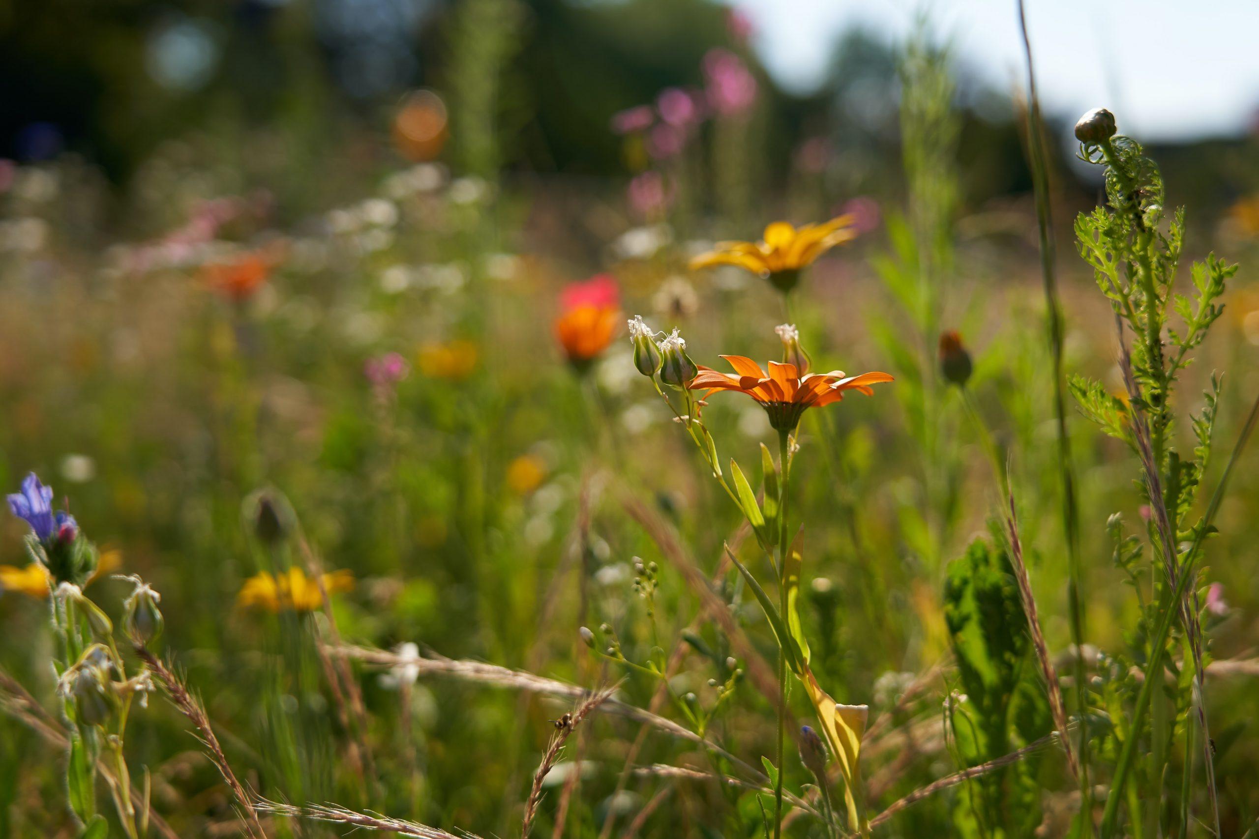 Insektenfreundlich, Biotop, Garten, Gartenbau Hamburg